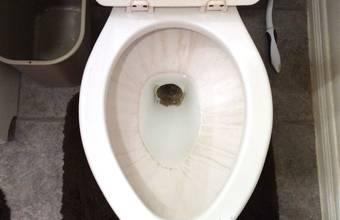 Toilet ontkalken